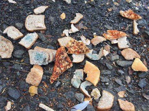 IKKE FUGLEMAT: Muggent brød og pizza er ikke mat for fugler.