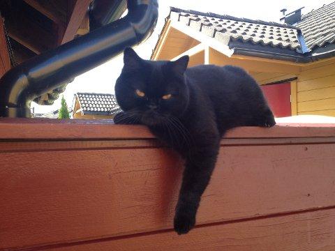 Mira har store okergule øyne, og et søtt bamseaktig ansikt.
