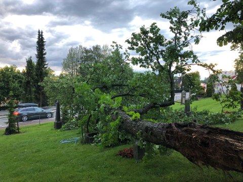 UVÆR: Uværet i Oslo onsdag kveld kom brått på, selv for metrologene. På Nordstrand kirkegård veltet et stort tre. Foto: Nina Schyberg Olsen