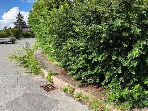 IKKE SLIK: Slik som denne hekken ser ut er ikke innafor, mener Oslo kommune. Derfor har de nå sendt ut varsel til flere beboere på Nordstrand. Blir ingenting gjort kommer de og tar hekken selv med de redskapene de har tilgjengelig.