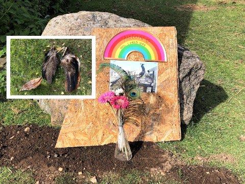 BLE BEGRAVD: Restene av påfuglen Anton kunne endelig bli begravd etter de ble funnet i Ekebergparken tidligere denne uken. Her er steinen hans på EKTs område.