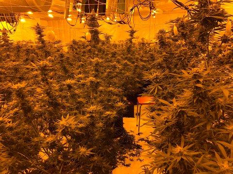 I boligen var det profesjonelt utstyr for planteproduksjon.