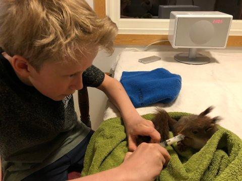 Audun Skaare Søbstad (12) fra Malmøya delte rom med to ekorn i over en måned. Han sørget for at de fikk nok mat ved å fore de gjennom en sprøyte.