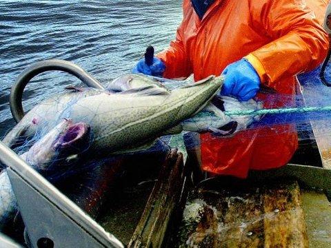 MILLIONTILTAK: Tre fiskerihavner i Troms er med i Nasjonal transportplan, med ulike havnetiltak på tilsammen 279 millioner kroner.