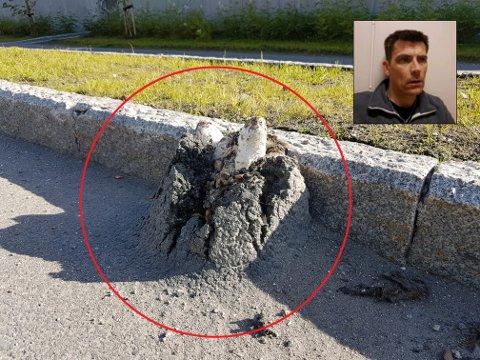 Per-Einar Sandvik tok dette fascinerende bildet av matblekksopp som har sprengt seg gjennom asfalten.