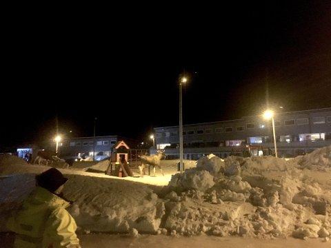 NOEN SOM VIL LEKE? Tre av de fire elgene på lekeplassen i Fugløyvegen i Tromsdalen sent søndag kveld. Foto: Stian Saur