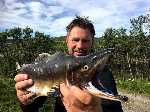REKORDÅR: Ifølge Rune Muladal vil 2019 være et rekordår for pukkellaks i nordnorske elver og vassdrag.