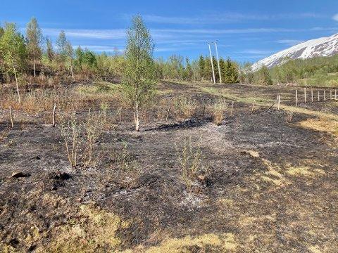 GRESSBRANN: Omtrent 20 mål brant opp i Malangen fredag formiddag.