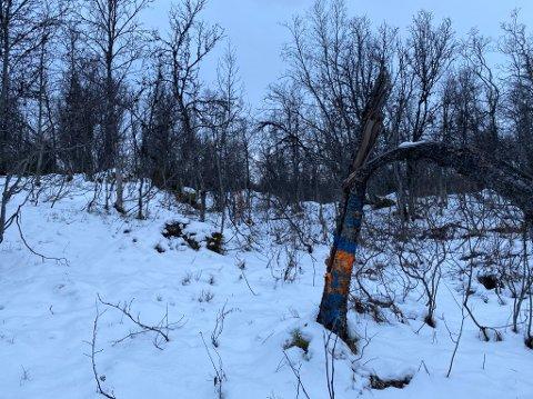 MARKERING: Sprayen på trærne i skogen, markerer den øvre grensa for planområdet mellom Hamna og Mortensnes. Nå vil administrasjonen i kommunen flytte den lengre ned.
