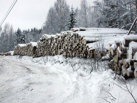 PUSSIG: – Skogeierlagslederne fra gamle Oppland er indignerte over antall terminaler i Hedmark, for så i neste øyeblikk å argumentere for ytterligere en terminal i Hedmark, mener artikkelforfatterne.