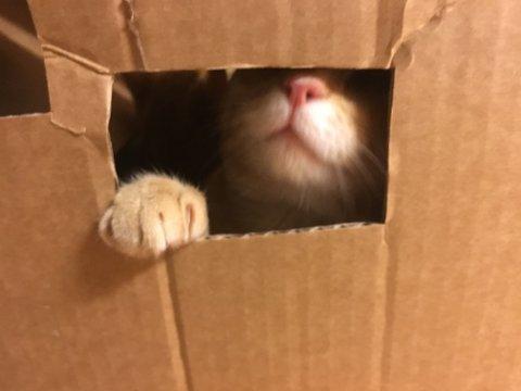 Fem katter var hensatt i denne pappesken med luftehull på Biri.