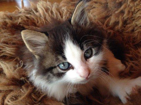 Kattesand skal ikke i matavfallet, men restavfallet, påpeker Mjøsanlegget gjenvinner søpla vår.