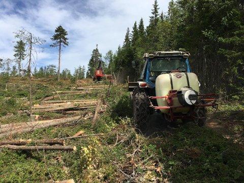 TØRT: Tørke og tørre skogsområder kan gjøre at skogdriften må stanse helt opp. En lang stans vil få dramatiske konsekvenser for hele næringskjeden.