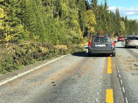 VINDKAST: Kraftig vind felte trær over fylkesveg 33 på Vardalsåsen onsdag.
