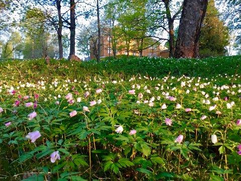 SKAL FREDES: I vår starter prosessen med å frede hagen og parkanlegget med mer på Stenberg i Vestre Toten.