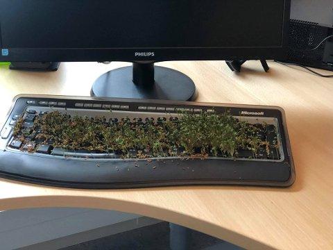 """""""PLANTEFELT"""": Om ikke Harald Larssen har for vane å trampe i salaten, så kan han taste i den... Foto: Harald Larssen"""