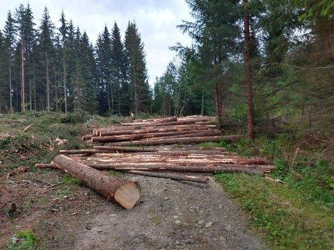 TØMMERSTOKKER: På tvers av en del av 13-kilometeren ligger det tømmerstokker nok til å stoppe både gående og syklende.