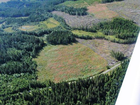 MODELLFLYPLASS: Gjøvik kommune eier skogseiendommen Alm-Sæteren, der modellflyplassen er vedtatt. Flere skogeiere eier skogsbilvegen i området. Rullebanen skal anlegges på det nærmeste området.
