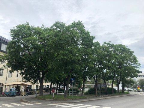 ENDEL AV BYBILDET:Gjøvik kommune har leid inn en ekspert for å undersøke trærne som står i Panparken.