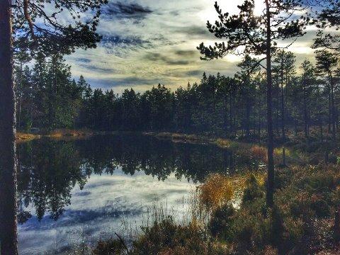 Mangfoldet i Østmarka er en av grunnene til at forkjemperne gjerne vil utvide vernet fra reservat til nasjonalpark. Dette bildet er fra Igletjern på vei inn til Vangen.