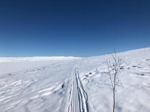 VIDDA: Solheimstulen ligger ved porten til Hardangervidda nasjonalpark. Milevis med kvista løyper lokker innover den åpne vidda.