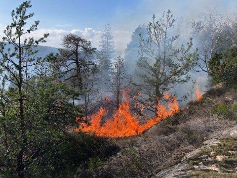 SKOGBRANN: Mandag ettermiddag brant det kraftig i et skogområde på Røysåsen i Moss.