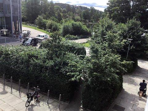 STUSSELIG: Anne Elisabeth Henriksen synes klippingen av buskene på Kolbotn Torg er stusselig. Kommunen skal fullføre jobben.