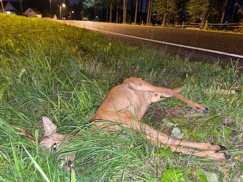 Et påkjørt rådyr ble liggende i veikanten på Holstad i flere timer fredag.