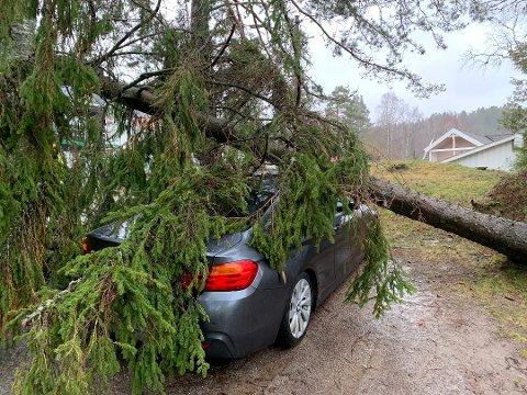 VIND: Det er fare for at vinden kan knekke trær. Dette bildet er fra uværet i februar i år.