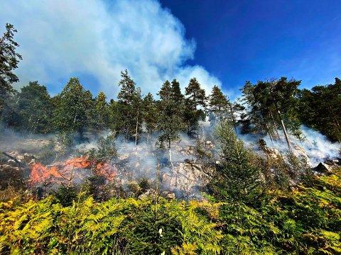 BRANN: Det er svært tørt i skogbunnen den siste tiden, slik at det er stor fare for skogbrann, sier brannsjef Hans-Otto Schjerven. Foto: Vestfold interkommunale brannvesen