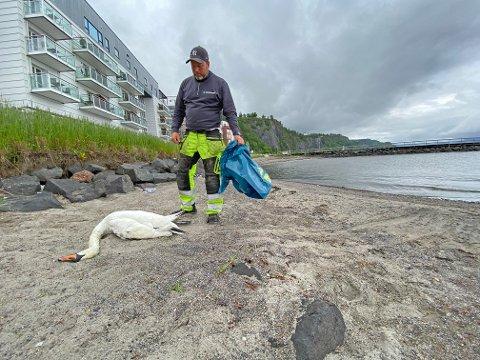 Fredag kveld ble det bekreftet utbrudd av fugleinfluensa i Holmestrand. Ikke mat eller ta på fuglene. Den døde svanen fra Dulpen er en av de som ble testet.