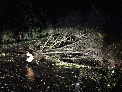 TREFALL: Flere trær har falt over veier i morgentimene, her fra Gjennestadveien i Stokke.