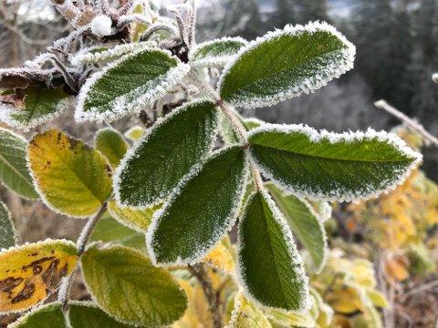 KULDE OG GLATTERE: Frosten har hatt et grep på Lardal og indre deler av Vestfold i flere uker. Neste uke blir det kaldere også langs kysten, spesielt på natten og om morgenen.
