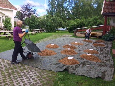 Aksjonsdugnad: Kvelde og Hvarnes hagelag arrangerte Larviks største aksjon mot brunsnegler.