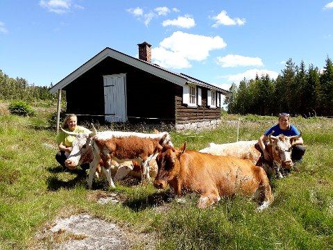 PÅ PLASS: Telemarkskuene er noen flotte dyr. De er glade for å komme på ferie på Nordgardsetra. Den ene kua har med seg en liten kalv. Seterjente Dagny til venstre, og sjefsseterjente Helene til høyre.