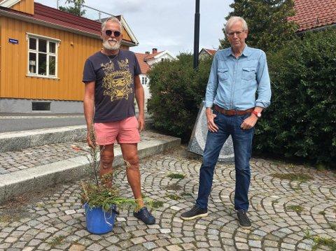 DÅRLIG VEDLIKEHOLD: Beboere på Langestrand er misfornøyd med stellet av kantstein og ugress.