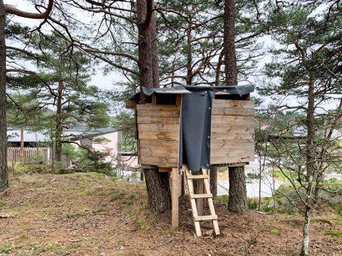 TREHYTTE: Trehytta er en relativt solid konstruksjon, bygget mellom furutrær, med utsikt rett ned mot Bergslihallen.