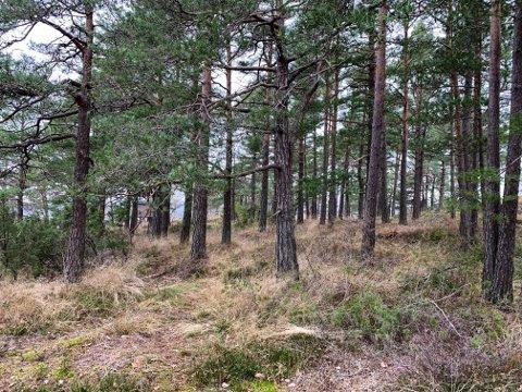 SKOGEN: Trehytta ligger et stykke inni skogen, et område som nå er definert som et LNF-område.