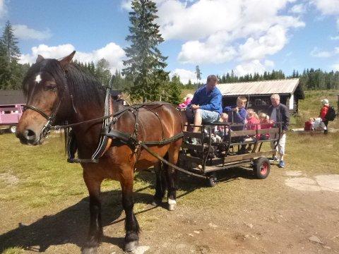 HESTENS DAG: «Hesten er et naturlig og populært innslag i miljøet på Nordgardsetra. Her er det Brian Andersen som kjører glade barn ved en tidligere anledning». (Foto: Tor Bjørvik)