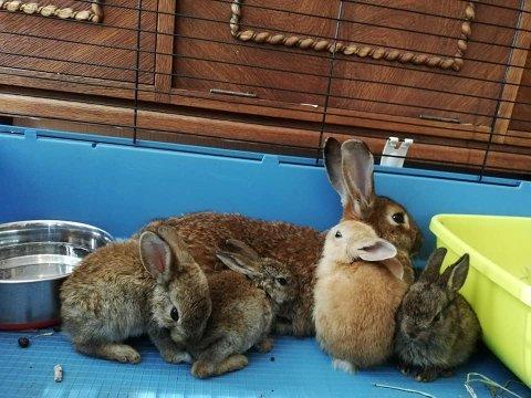 REDDET: En kaninmamma og fire unger er funnet i live etter å ha blitt dumpet langs Åsrumveien. Nær dem er det funnet like mange døde.