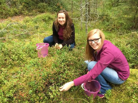 PLUKKER: Paulina Czajka (til venstre)  og Anna Haynes plukker blåbær.