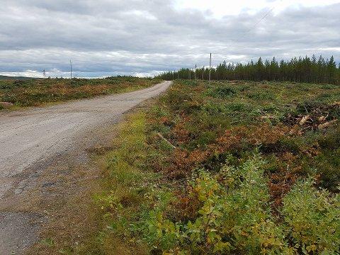 BARBERT: Et tjukt skogsbelte er fjernet for å gjøre plass til landingsstripen på den nye flyplassen utenfor Sälen.