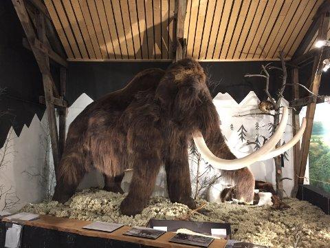 HVA SKAL DEN HETE: Den har vært svært populær i sommer, men hva skal mammuten hete?