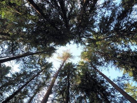 TRE KJØPERE: 5,7 millioner kroner ble totalprisen for de åtte skogteigene. Illustrasjonsfoto: Cathrine Loraas Møystad