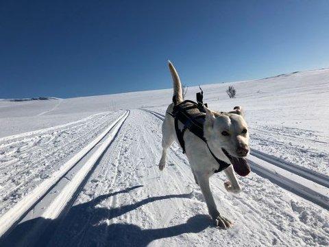 If gir deg tipsene som gjør skituren til en fin opplevelse - også for de firbeinte. (Illustrasjonsfoto: If)