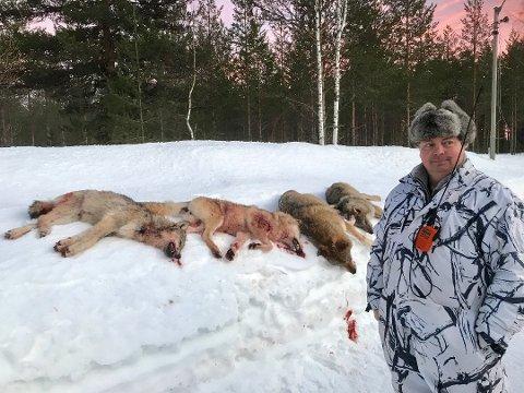 TATT UT: 1. januar i år ble det tat ut fire ulver. Her er ulvene fotografert sammen med jaktleder Arne Sveen. Arkivfoto: Rune Hagen