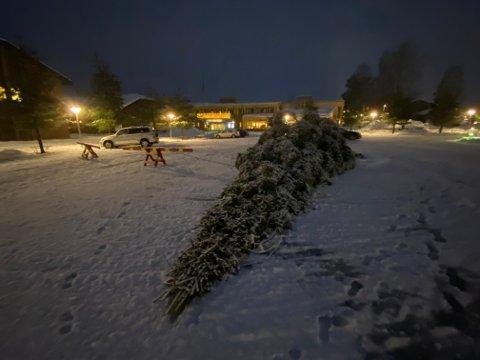 SAGET NED: Noen har felt et juletre i Åmot. Problemet er bare at det var juletreet på torget på Rena som ble sendt i bakken. Ugjerningen fant sted natt til onsdag. Politiet har startet etterforskning.