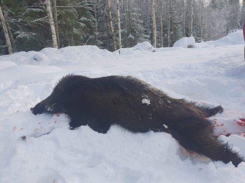 JAKT: Dette ungdyret ble felt i Julussdalen lørdag.