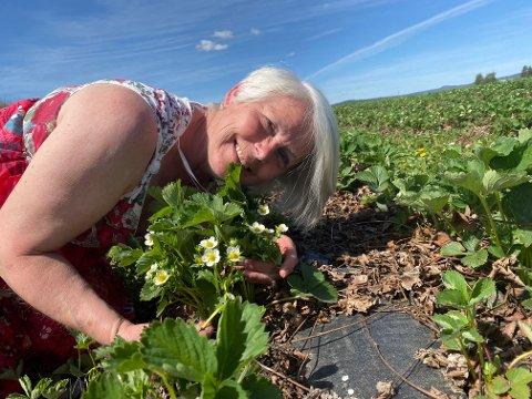 Eva Molberg kan nyte synet av  en blomstrende jordbæråker, men risikerer å tape fortjenesten av årets avling om hun ikke får nok plukkere på plass.