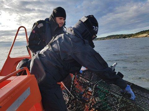En ulovlig satt teine trekkes i fredningsområdet for hummer ved Stauper i Vestfjorden.